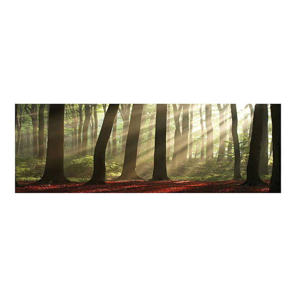 Forest Morning 40 x 120 cm